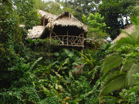 Jungle home <3